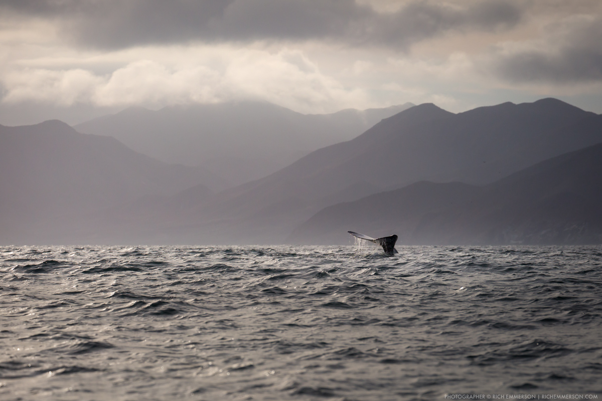 Humpback Whale - Photographer - richemmerson.com