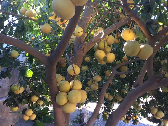 beautiful fruit trees